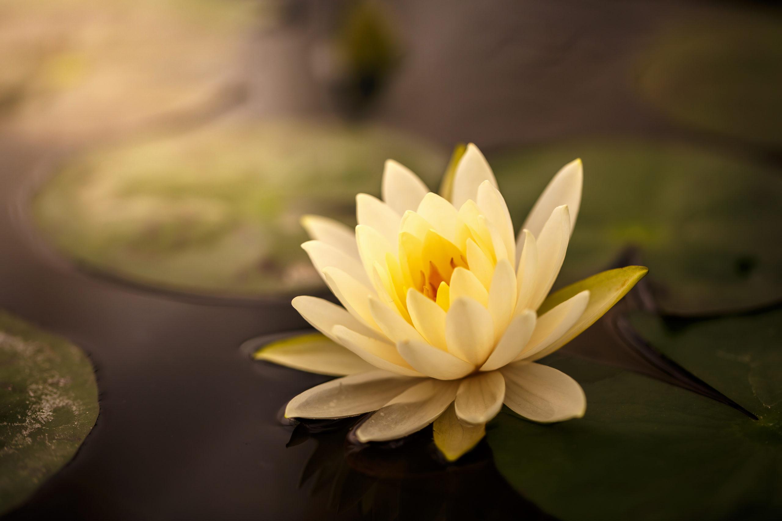 Méditation Vipassana avec Christèle Pugin