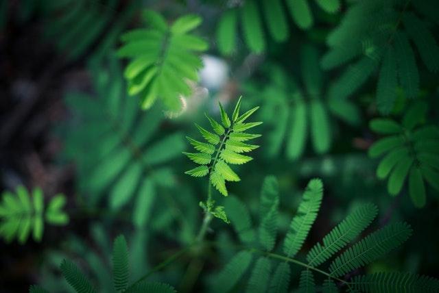 Méditation, nature et création